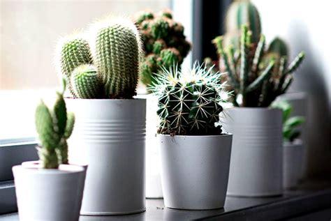 wallpaper bunga kaktus tanaman hias 21 tanaman hias dalam pot yang dapat