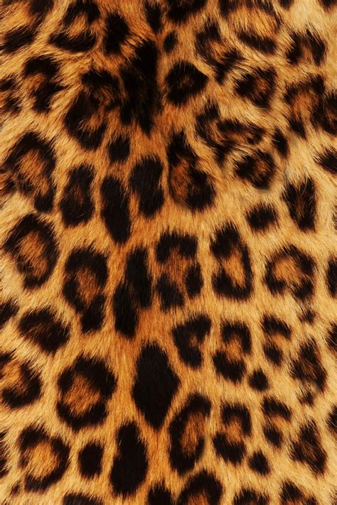 wallpaper iphone 5 leopard animals background leopard wallpaper sfondo image