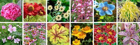 Fleurs Qui Resistent Au Vent by Magazine Petit Jardin N 176 90 Avril 2014 Jardinage
