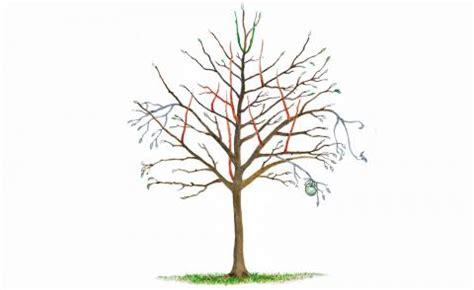 obstbaumschnitt wann obstb 228 ume schneiden 10 tipps mein sch 246 ner garten