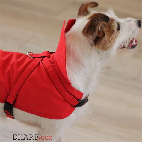 design dog jacket dharf red dog jacket red dogue com au