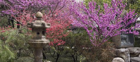 giardino in fiore hello world
