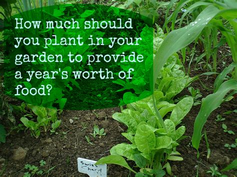 When Should I Plant A Vegetable Garden How Much Should You Plant In Your Garden Gardening