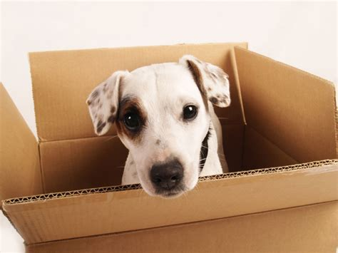 shipping a puppy things to consider when shipping a bandanas