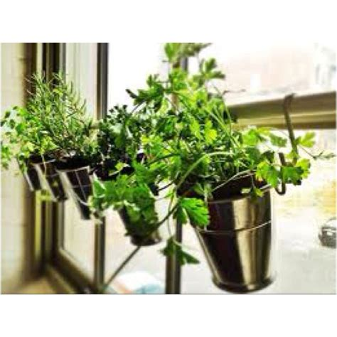 window herb gardens 17 best images about garden in the window on pinterest