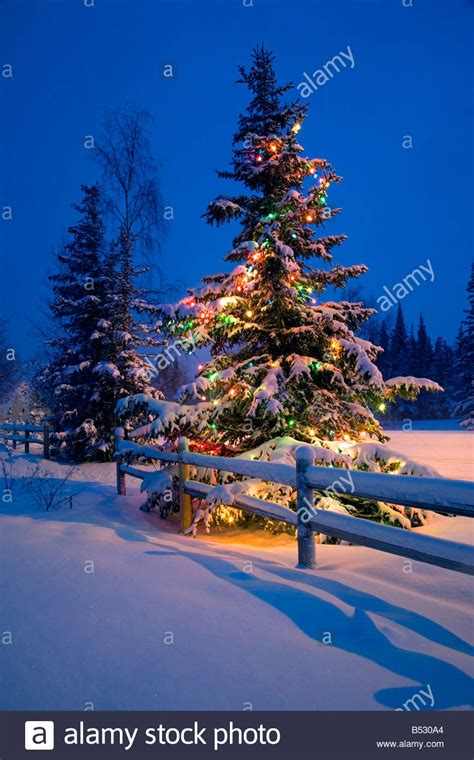 snowy alaskan cluster light tree decorated tree along snow covered fence rail stock photo royalty free image