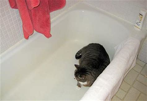cat keeps pooping in bathtub cat feces stain inside bathtub stain removal help