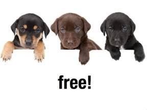 Free Puppies Free Puppies Davidebowman