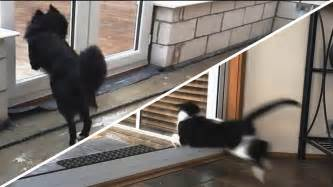 cat runs into door cats and dogs vs glass doors compilation new