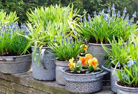 Shade Plants For Window Boxes - how to plant in pots planet natural