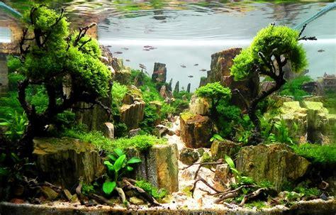 interview mit andre franken aquariumeinrichtencom wie