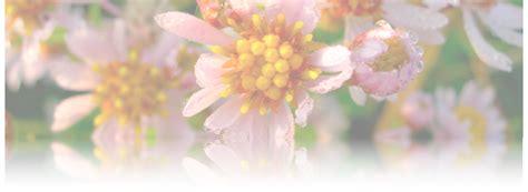 wespen bloemen wespen in de tuin