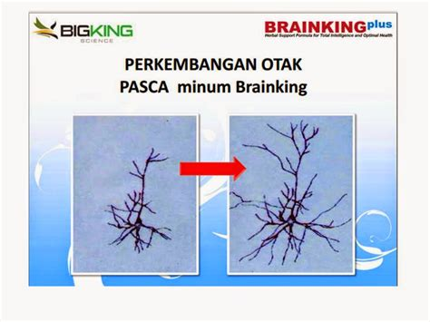 Brainking Plus Bayi jual brainking plus pelopor nutrisi otak syifa