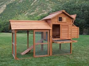 backyard chicken coop pictures