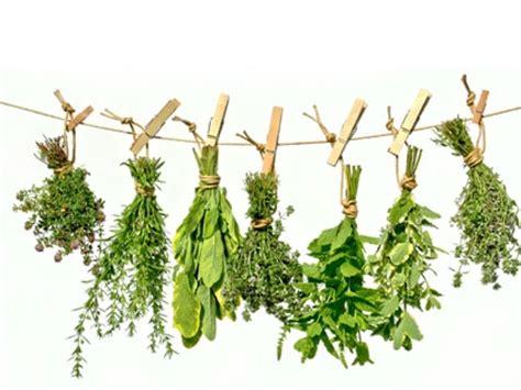Plantes Aromatiques Cuisine