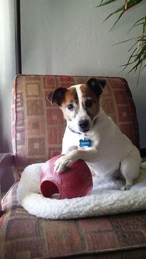 pet sitting arizona s heidi s historic home pet care