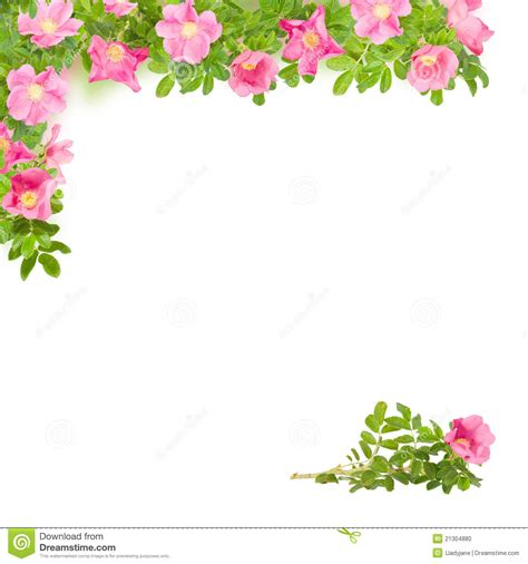 Green Architecture House Plans by Square Floral Frame With Pink Briar Stock Photo Image