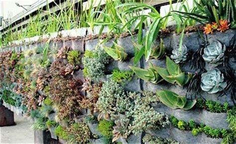mpv landskap  nurseri poket tanaman tumbuhan