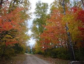 september in northern minnesota birch forest lodge