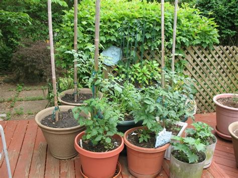container gardening peas container gardening for vegetables