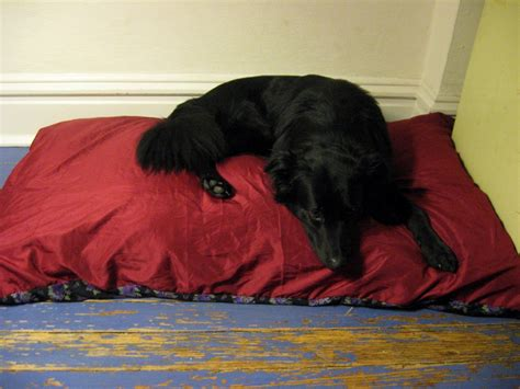 how to make a dog pillow bed frugal friday pillows and or dog beds wild gourd farm