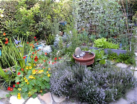 backyard herbs cool very attractive design herb garden with yellow red purple flowers