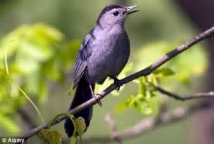 size doesn t matter birds singing skills are not related