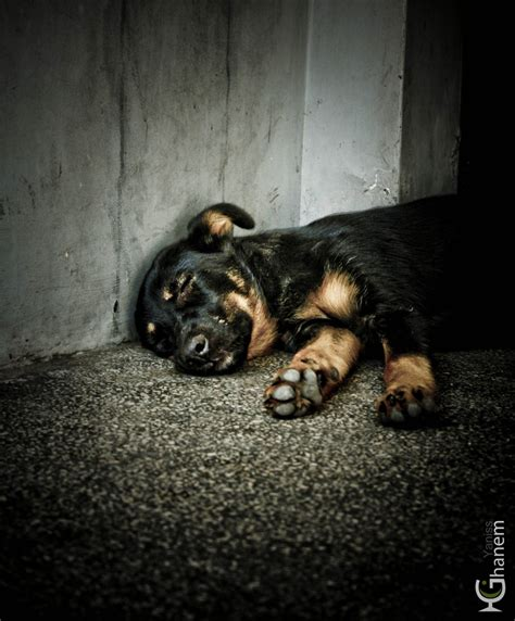 homeless puppies homeless by yanissghanem on deviantart