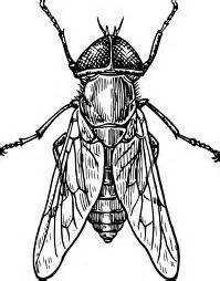 insect drawings google