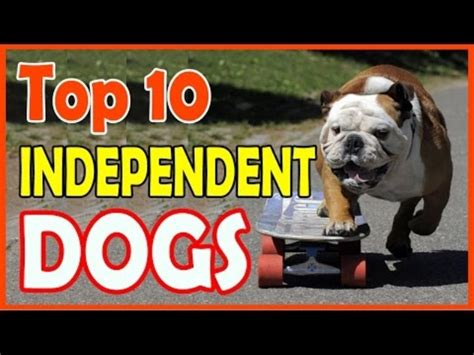 independent breeds top 10 independent breeds