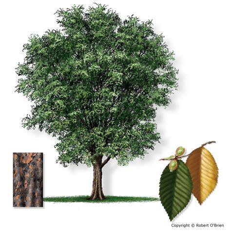 west elm tree west elm tree 28 images diy west elm tree stump side