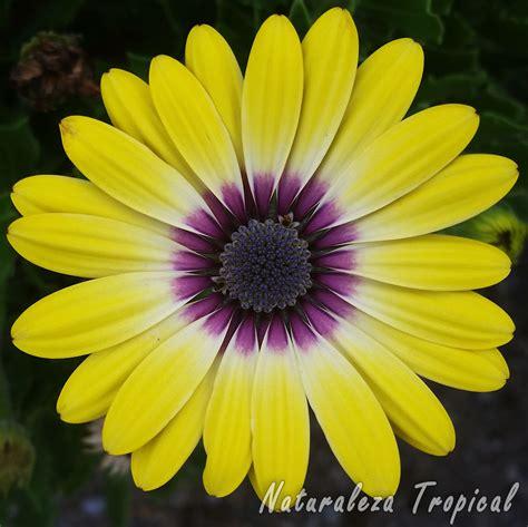 imagenes flores y nombres naturaleza tropical 10 im 225 genes de flores que te