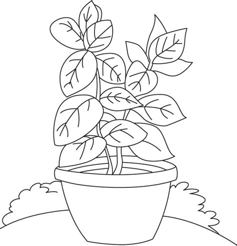 herb garden coloring pages vase coloring page download free basil vase coloring