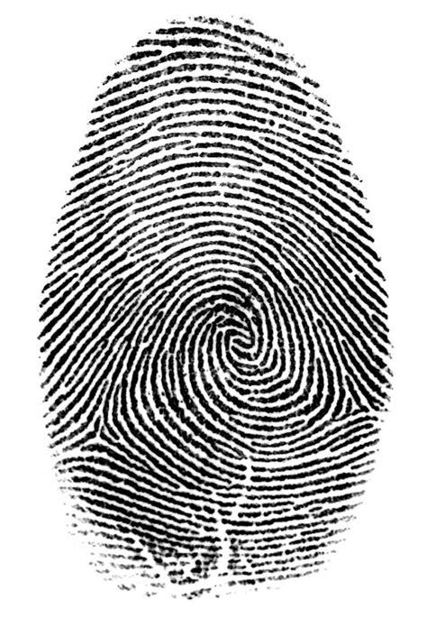 pattern types of fingerprints a fingerprint expert blogs