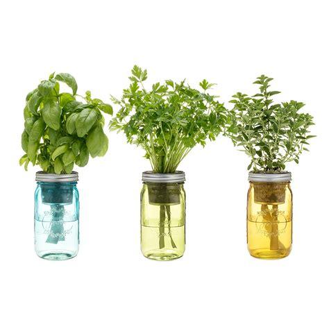 watering mason jar indoor herb garden  green head