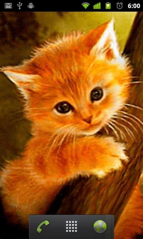 cute cat wallpaper live cute kitten live wallpaper free android live wallpaper