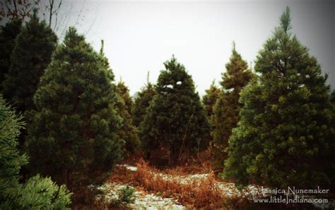 28 best christmas tree farms indiana 2014 indiana