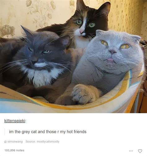 Funny Cat Memes Tumblr - 20 cat posts on tumblr that are impossible not to laugh