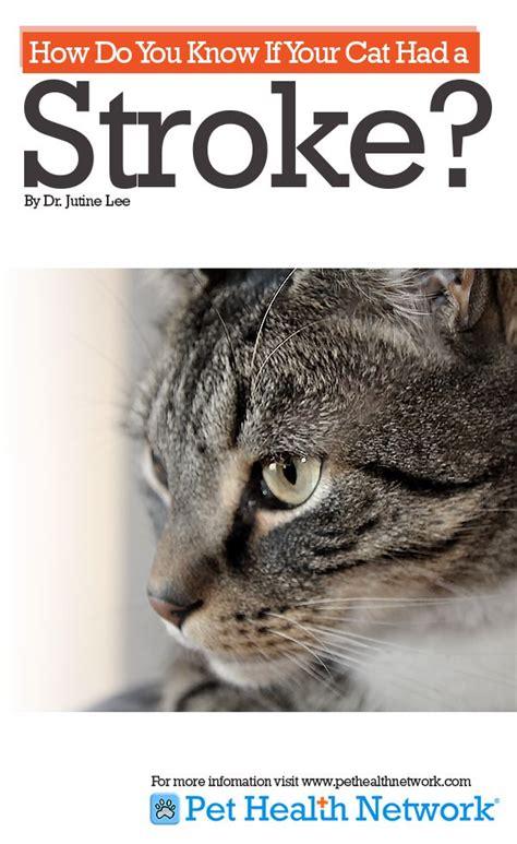 yorkie stroke symptoms the world s catalog of ideas