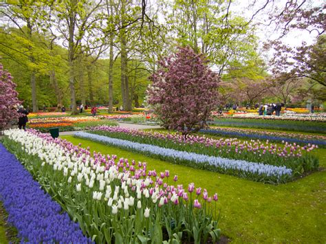 garden pictures keukenhof gardens netherlands may 2013 douglas stebila