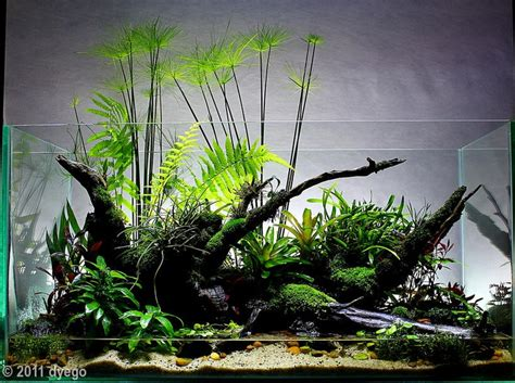 aquascape plants list 2011 aga contest entry 384 180l paludarium cyperus home
