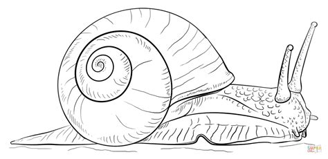 snail coloring page land snail coloring page free printable coloring pages