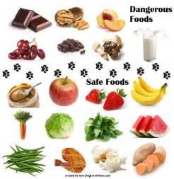 dangerous food for dogs safe food for dogs