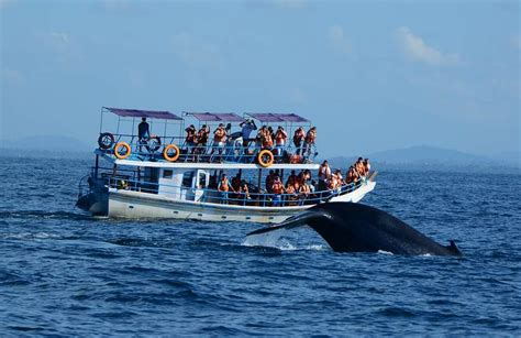 monterey whale watching boats tips for safe whale watching don t be caught off guard