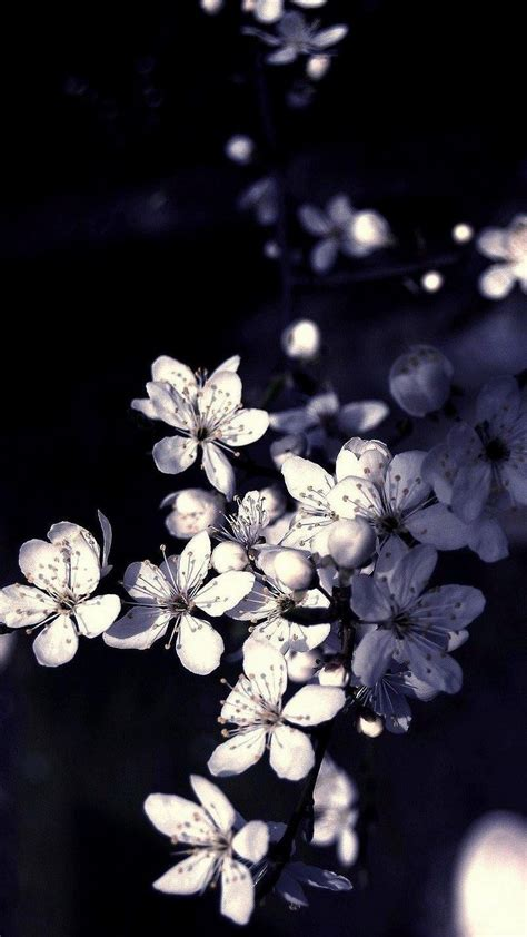 Wallpaper Flower Untuk Android | black white apple tree flowers android wallpaper free download
