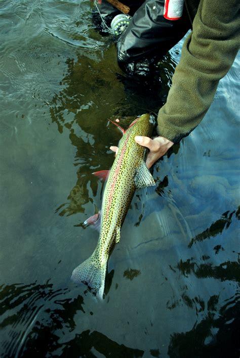 fly fishing colorado s roaring weekend update colorado s roaring fork valley colorado
