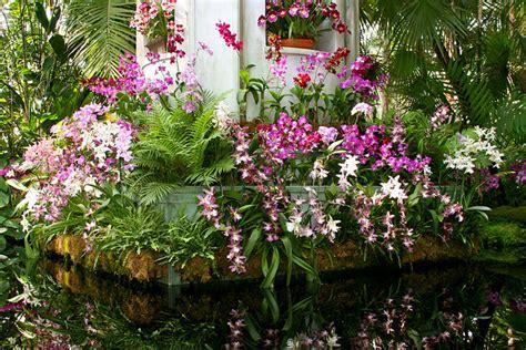 imagenes de jardines con orquideas orquideas jardin
