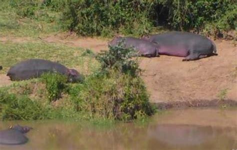 live kenya wildlife animals watering hole web cam mpala