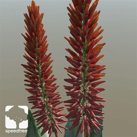 Aloe Vera Jumbo aloe vera large speedtree