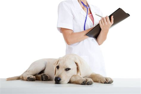 puppy vet visit cost pet insurance protection fiscal muses